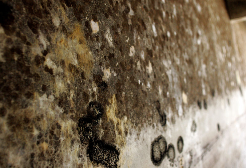 Mold the stubborn intruder: What is the cause?
